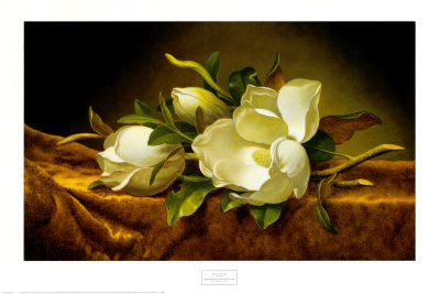 8361magnolias-on-gold-velvet-cloth-posters