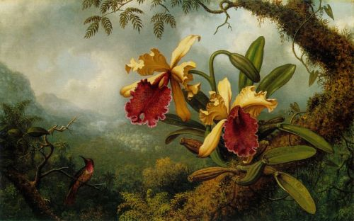 heade-orchids-and-hummingbird