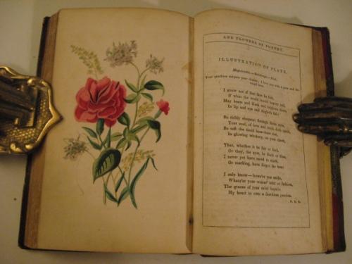 poetry___flowers_2454