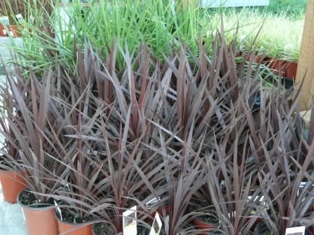 purple-grass