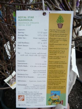 royal-star-magnolia-directions