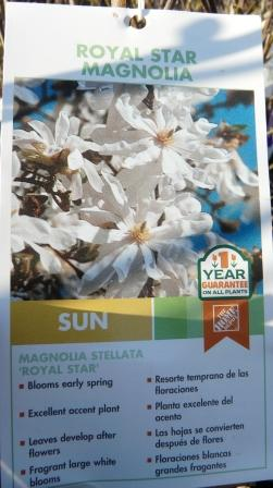 royal-star-magnolia-tag