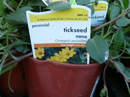 tickseed