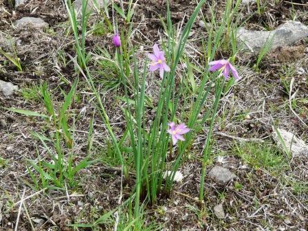 wild-flower-in-pasture